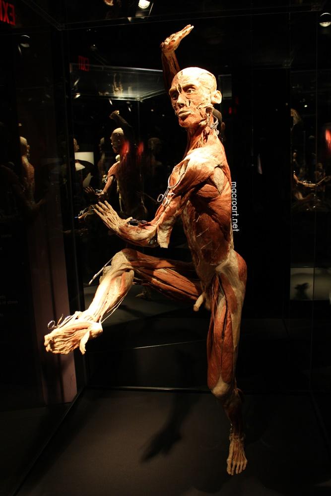 The Tai Chi Man ใน Body Worlds